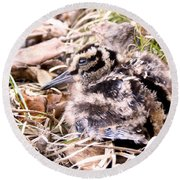 American Woodcock Chick Round Beach Towel