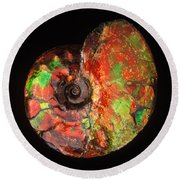 Ammonite Fossil Round Beach Towel