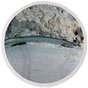 An American Eel Prowls Along The Edge Round Beach Towel
