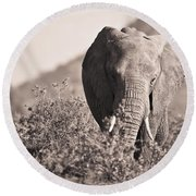 An Elephant Walking In The Bush Samburu Round Beach Towel