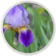 An Iris Blossom Round Beach Towel