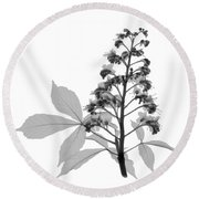 An X-ray Of A Chestnut Tree Flower Round Beach Towel