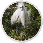 Angry Bird Snowy Egret In Breediing Plumage Round Beach Towel