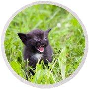 Angry Kitten Round Beach Towel