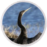 Anhinga - Drying Out Round Beach Towel