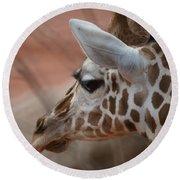 Another Giraffe Round Beach Towel