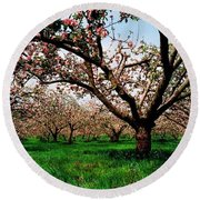 Apple Orchard, Co Armagh, Ireland Round Beach Towel