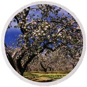 Apple Trees In An Orchard, County Round Beach Towel