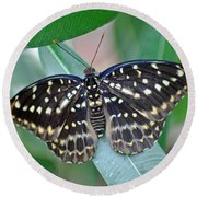 Archduke Butterfly Round Beach Towel