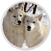 Arctic Wolves Close Together In Winter Round Beach Towel