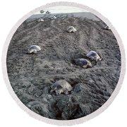 Arribada Of Olive Ridley Turtles, Costa Round Beach Towel