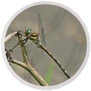 Arrowhead Spiketail Dragonfly - Cordulegaster Obliqua Round Beach Towel