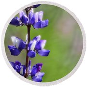 Arroyo Lupine  Round Beach Towel
