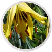 Asiatic Lily Named Black-eyed Cindy Round Beach Towel