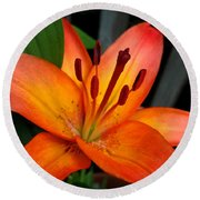 Asiatic Lily Named Gran Paradiso Round Beach Towel