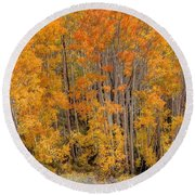 Aspen Forest In Fall - Wasatch Mountains - Utah Round Beach Towel