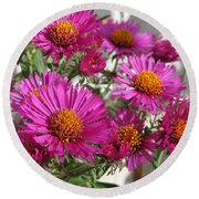 Aster Named September Ruby Round Beach Towel