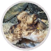 Atlantic Octopus In Shell Debris Round Beach Towel