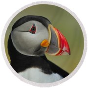 Atlantic Puffin Portrait Round Beach Towel