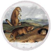 Audubon: Prairie Dog, 1844 Round Beach Towel