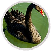 Australian Black Swan Round Beach Towel