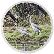 Australian Cranes At The Billabong Round Beach Towel