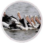 Australian Pelicans Round Beach Towel