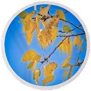 Autumn Aspen Leaves And Blue Sky Round Beach Towel