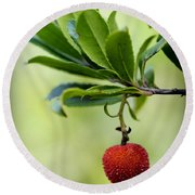 Autumn Fruits In Red Round Beach Towel