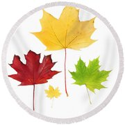 Autumn Leaves Isolated Round Beach Towel