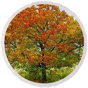 Autumn Maple Tree Round Beach Towel