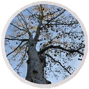 Autumn Oak Round Beach Towel by Bill Cannon