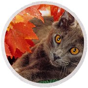 Autumn Reds And Ambers Round Beach Towel