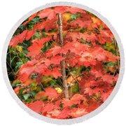 Autumnal Acer Round Beach Towel