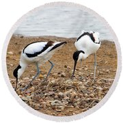 Avocets At Nest Round Beach Towel