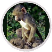 Baboon Baby Round Beach Towel