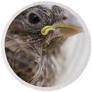 Baby Bird 3 Round Beach Towel by Jessica Velasco