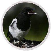 Baby Blackbilled Magpie Round Beach Towel