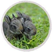 Baby Bunnies Round Beach Towel