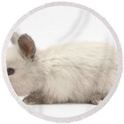 Baby Colorpoint Rabbit Round Beach Towel