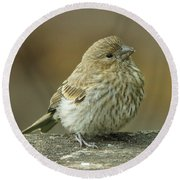 Baby House Finch Round Beach Towel