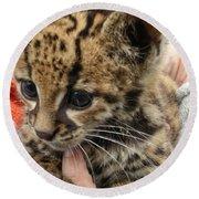 Baby Jaguar Round Beach Towel
