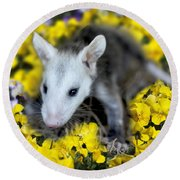 Baby Opossum In Flowers Round Beach Towel