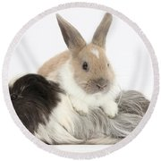 Baby Rabbit And Long-haired Guinea Pig Round Beach Towel