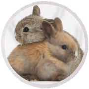 Baby Rabbits Round Beach Towel