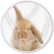 Baby Sandy Lop Rabbit Round Beach Towel