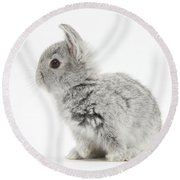 Baby Silver Rabbit Round Beach Towel