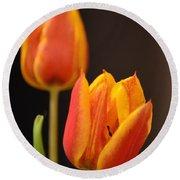 Baby Tulips Close Up Macro Round Beach Towel