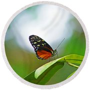 Backlit Butterfly Round Beach Towel