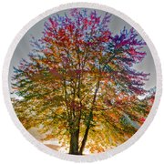 Backlit Maple In Autumn's Light Round Beach Towel